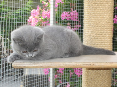 cream of the crop cattery pic 4
