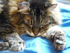 Bella is an old cat that is well looked after in cream of the crop cattery